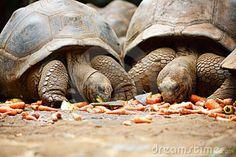 Le tartarughe giganti credute estinte tornano dopo 100 anni nelle loro Galapagos - MONDO ANIMALE