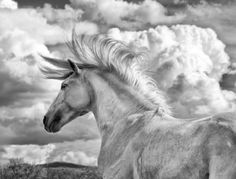 Wild Horses, Cowboys, Western and Fine Art Photography by Bev Pettit