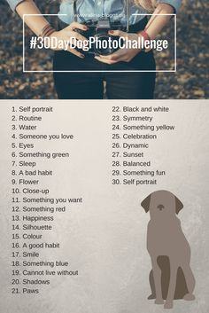 Hund Fotografie Challenge | 30 Day Dog Photo Challenge