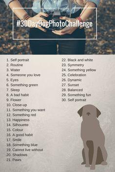 Hund Fotografie Challenge | 30 Day Dog Photo Challenge