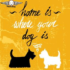 Home is also over at http://pilot.dog where all the rescued dogs we fly live.  #aviation #pilotnpaws #instaaviation #instagramaviation #dog #dogrescue #pilotdog #pet #pilot #instagrampilot #instapilot #instadog #foreverhome #rescuedog #dogs #pilotsnpaws