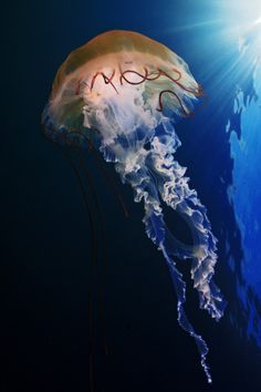 thelordismylightandmysalvation:Jellyfish by Andrew Shpatak  Colors ~ Blue and Brown