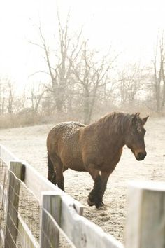 Keep horses healthy this winter: Follow these tips for cold-weather horse care. | Living the Country Life | http://www.livingthecountrylife.com/animals/horses/keep-horses-healthy-winter
