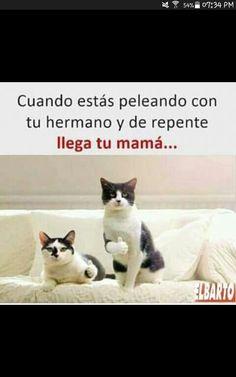 Todo está perfecto aquí no pasó nada. Funny Internet Memes, Funny Relatable Memes, Wtf Funny, Hilarious, Funny Spanish Memes, Spanish Humor, Funny Animal Memes, Funny Animals, Baby Chickens