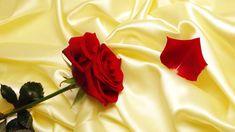 Red Rose on Silk Wallpaper Wallpapers Flowers, Red Flower Wallpaper, Hd Flowers, Silk Wallpaper, Free Hd Wallpapers, Silk Flowers, Beautiful Flowers, Vintage Wallpapers, Wallpaper Für Desktop
