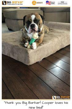 "Customer photo. To get this bed, https://bigbarker.com/?utm_content=buffer1e6bb&utm_medium=social&utm_source=pinterest.com&utm_campaign=buffer ""Thank you Big Barker! Cooper loves his new bed!"" American made dog beds, dog bed large breed, dog bed living room, dog bed luxury #bigbarker #bigdogs #dogbedsforlargedogs #dogbeds #madeinusa"