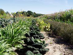 Gartenglück: Aktuelles