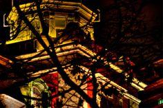 looking via trees by Ken Okamoto on 500px