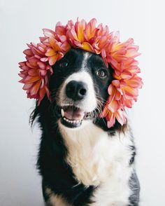 cute dog in a flower crown