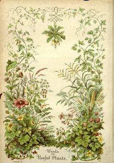 Frontispiece of 'Weeds and Useful Plants' by William Darlington (1859). Published by A.O. Moore and Co. Missouri Botanical Gard...