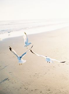 Poseidon Wedding - sea gulls at the beach | photography . Fotografie . photographie | Photo: Jose Villa @ oncewed |