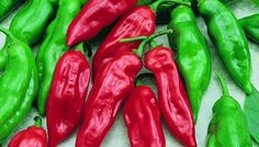 Pepper Habanero Mayan Capsicum chinense  This elongated red habanero pepper has the same fruitiness and hot combination coveted by habanero lovers.  The fruit are very attractive and tasty.