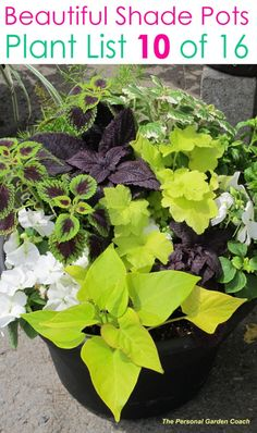 Create beautiful shade garden pots with easy shade loving plants & flowers. 16 colorful mixed container plant lists & great design ideas for shade gardens! – A Piece of Rainbow garden pots porches 16 Colorful Shade Garden Pots & Plant Lists Potted Plants For Shade, Shade Plants Container, Potted Plants Patio, Shade Garden Plants, Container Flowers, Flower Planters, Outdoor Plants, Garden Planters, Container Gardening