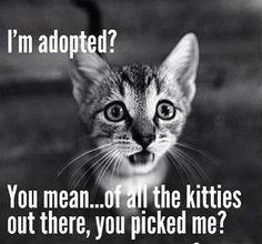 give a homeless cat a change to have a good life full of love - for young and older ones!