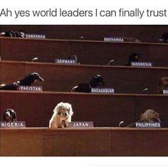 Lustige Tier Memes des Tages – 30 Bilder – Lovely Animals World … - Hunde Lustig Funny Dog Memes, Funny Animal Memes, Funny Dogs, Cute Dogs, Funny Animals, Cute Animals, Pet Memes, Funny Humour, Funniest Memes