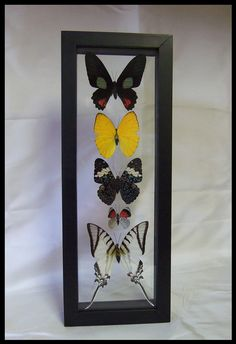 Colorful Peruvian Five Specie Butterfly Frame by timelessdesigns07 on Etsy