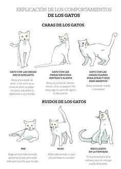 Mancoon Cats, Cute Cats, Funny Cats, Cat Text, Chesire Cat, Cat Emoji, Diy Cat Toys, Cat Hacks, Laughing Cat