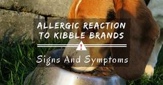 The Signs Of Allergic Reaction To Kibble Brands