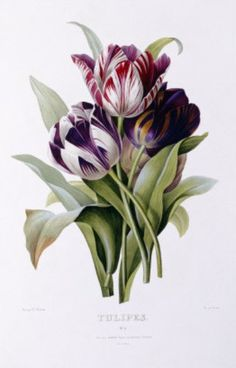 Pdf cross stitch pattern - Tulips (by Pierre-Joseph Redouté)    Last photo shows how it looks like the finished piece    With your purchase you will