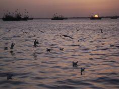 Gulf of Kutch, Gujarat.