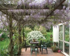 "Wisteria sinensis- a shorter variety os wisteria that would look so pretty on our patio.  Apparently a pretty hardy plant. Can be invasive?  Check out ""Wisteria frutescens""- an non invasive (zone 5-9)."