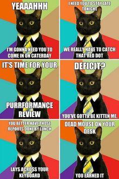 I wonder what would happen if Business Cat met Grumpy Cat?