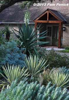 Yucca Color Guard summer bloom~ creamy white stalk up to 5' high from 3x3' mounded yellow/ blue-green edge spiked evergreen foliage. Description from pinterest.com. I searched for this on bing.com/images