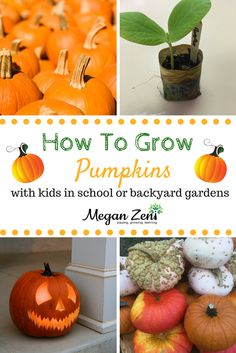 If you are going to have a school garden, then be sure to plan some space to grow your own pumpkins. They're easy to grow, have a big impact in your garden and produce one of the most versatile crops to harvest with children. Halloween Activities For Kids, Halloween Kids, Halloween Pumpkins, Types Of Pumpkins, Grow Pumpkins, Pumpkin Varieties, Pumpkin Garden, Raised Vegetable Gardens, Stem Projects