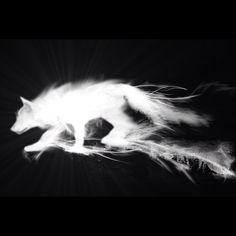 Wolf Patronus