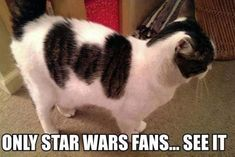 Revengeofthe5th.net: Empire Kitteh will deal with your Rebel friends soon enough