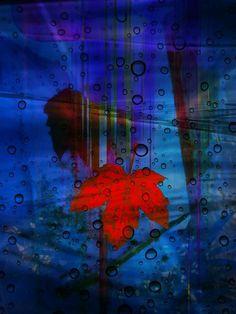 'Reflektion eines Ahornblattes' von Gertrude  Scheffler bei artflakes.com als Poster oder Kunstdruck $18.71