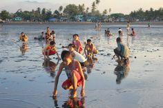 Clams sa Baybay Cadiz City, Clams, Philippines, Seashells