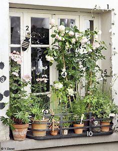 How To Water Indoor Plants – The Gardening Spot Outdoor Balcony, Balcony Garden, Balcony Ideas, Small Space Gardening, Garden Spaces, Gardening Tools, Jardin Luxuriant, Flower Pots, Flowers