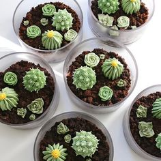 these terrarium cakes went out with some mini cactus cupcakes for one of my favorite clients earlier this week. it's been a busy past 3 weeks for my team of ONE, but so grateful for the work...and now looking forward to a few days off (hopefully).