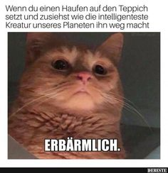 If you are looking for Cat Memes.Today we collect some Cat Memes evil that are so humor and hilarious.Read This Top 29 Cat Memes Evil Top 29 Cat Memes Evil Top 29 Cat Me…