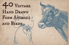 Check out 40 Vintage Farm Animals and Birds by Mr Vintage on Creative Market  {HEART}