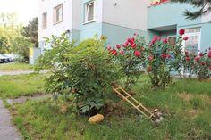 #продажанедвижимости #всловакии #братислава #квартиры Адрес: 851 03 Bratislava, Petržalka, Mlynarovičova. Двухкомнатная квартира на продажу, ул. Млинаровичова (Mlynarovičova), район Петржалка (Petržalka), Братислава, Словакия. Квартира площадью 54,46 м2 + 3 м2 лоджия + 1 м2 кладовая, панель, этаж 11 из 14, лифт, состоит... Подробнее: Янина Зборовская; тел: +421 903 407 775; mail@realty-slovakia.ru. Plants, Plant, Planets