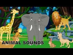 ▶ Sounds of Animals | Animal sound effects of real animals | Kindergarten Learning videos playlist - YouTube