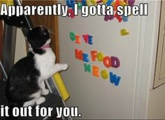 cute animals with captions | ... Funny captions make cute photos better (27 photos) » cute-captions-10