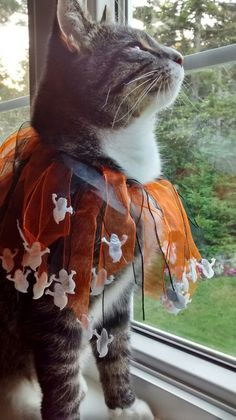 Halloween kitty watching the birds fly by...