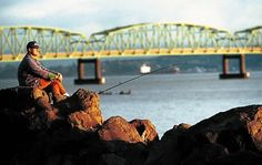 Sturgeon fishing in the Columbia River estuary will be closed beginning Friday.