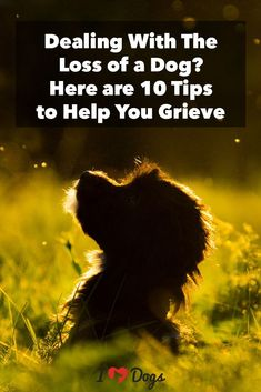 Dealing with the loss of a dog can feel impossible.Here are some tips to help manage the pain. Dealing with the loss of a dog can feel impossible.Here are some tips to help manage the pain. Pet Loss Grief, Loss Of Dog, Pet Dogs For Sale, Dogs And Puppies, Doggies, Pomsky Puppies, Dachshund Puppies, Rabbit Cages, Young Living Pets