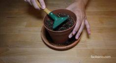 Cómo airear la tierra de las plantas