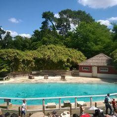 Spectacle d'otaries du Zoo de la Flèche