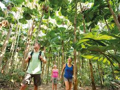 Top 10 day trips from Cairns