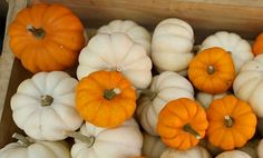 Picking the right pumpkin for cooking — a must-watch before your next farmer's market trip!