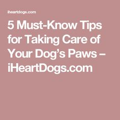 5 Must-Know Tips for Taking Care of Your Dog's Paws – iHeartDogs.com