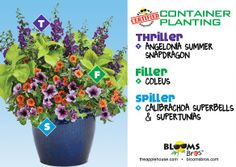 #containergardening using angelonia supper snapdragon, calibrachoa, supertunias #terrehaute #applehouse #flowerpots