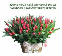 Name Day, Happy Birthday, Gardening, Quotes, Plants, Drawings, Happy Brithday, Quotations, Saint Name Day