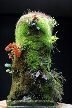 Terracotta tubes used as plant bases for moss and orchids.